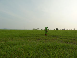 草原(芝生)