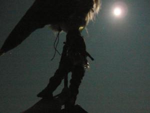 小人の月光浴